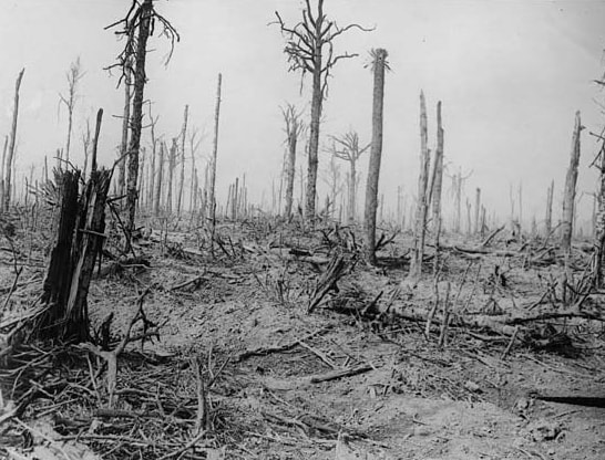 Delville Wood after the war